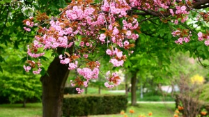 Spring-Trees[1]