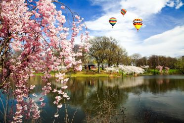 The-Cherry-Blossom-Festival-in-Branch-Brook-Park-New-Jersey.-Photo-by-Gary-718-at-www.123RF.com_[1]